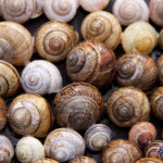 Snips and Snails,….