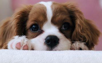 puppy-parent