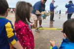 Sea Turtle Inc Turtle Release
