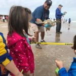 Sea Turtles and the Cold: Rescue and Release