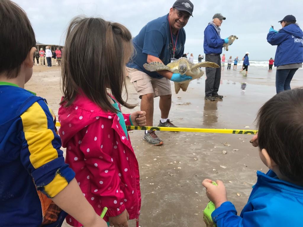 Sea Turtle Inc Turtle Release