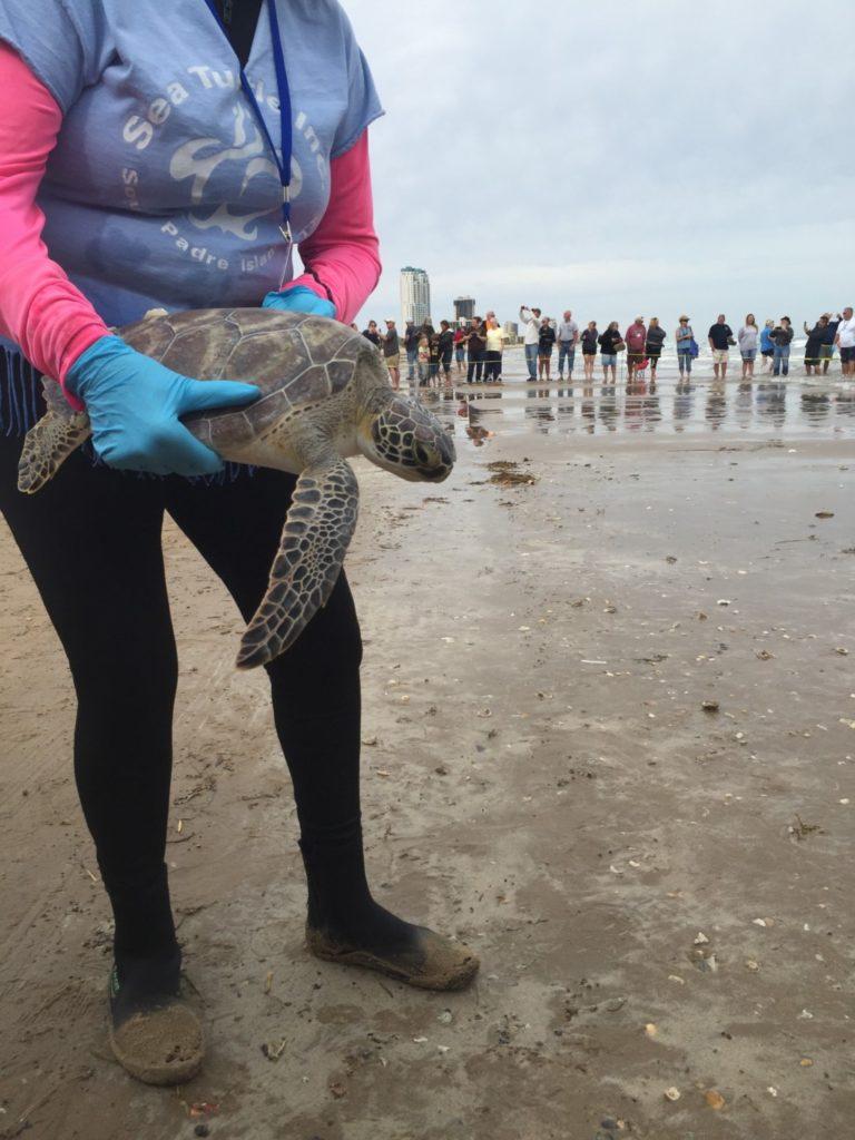 Sea Turtle Rescue Release