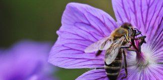 birds-bees-conceive-pregnancy