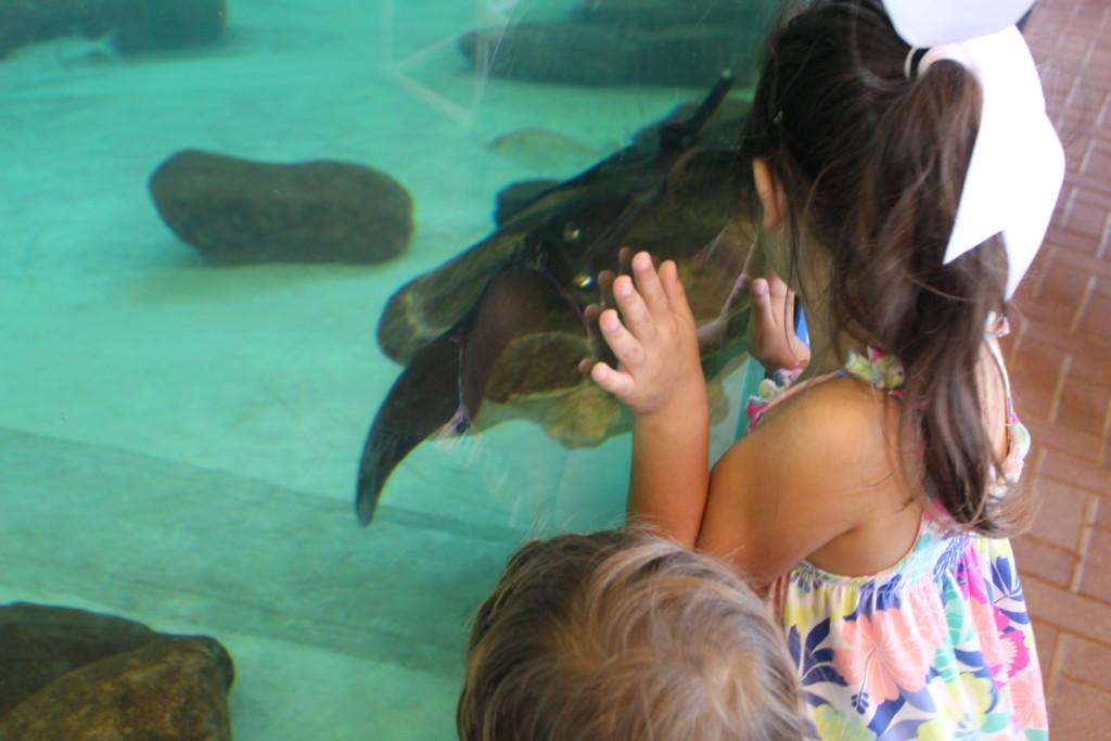 Sea Turtle Inc Allison