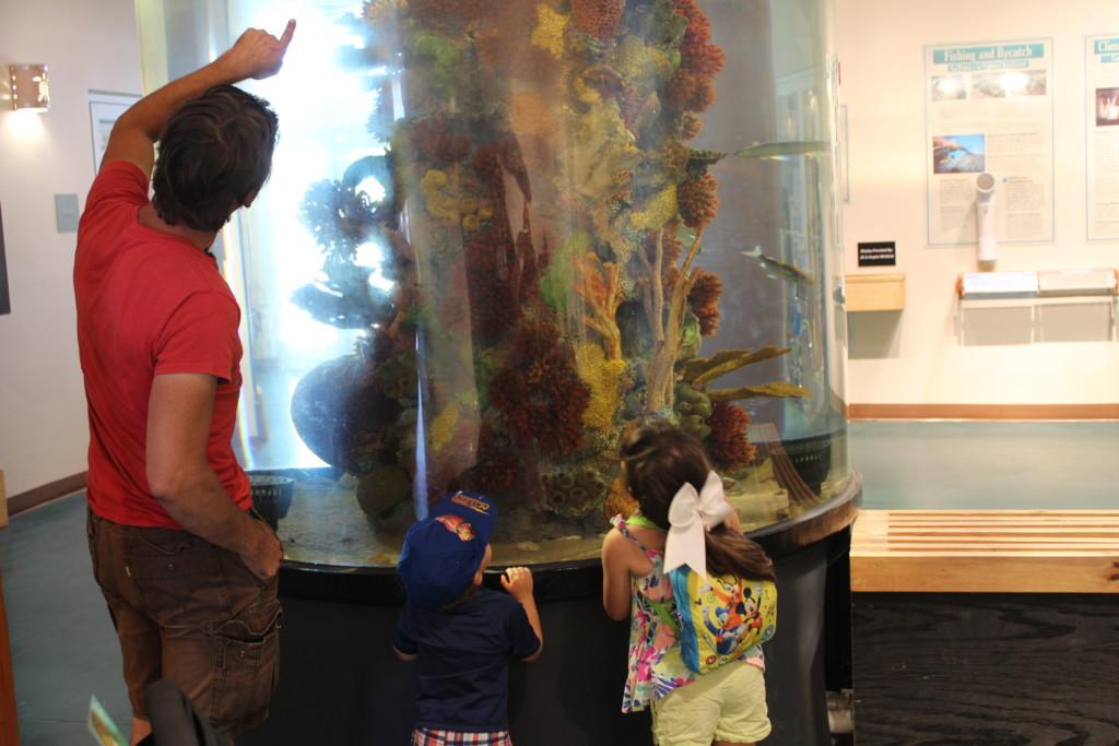 Sea Turtle, Inc. Lobby 1
