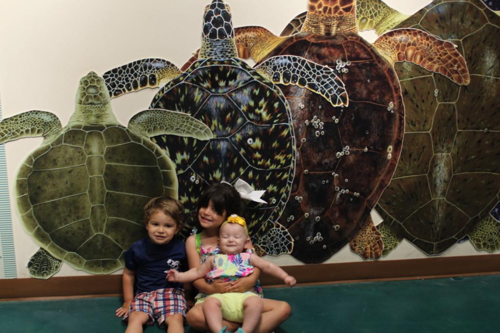 Sea Turtle, Inc. Lobby 2